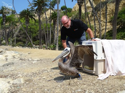 Pelican Products CEO, Phil Gyori, releasing Brown Pelican.